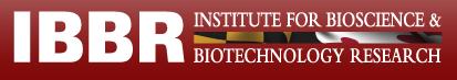 IBBR logo