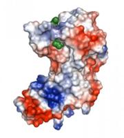 3d-enzyme-model