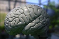 brain-sxc