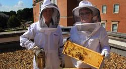 launch-umd-beekeeper-image