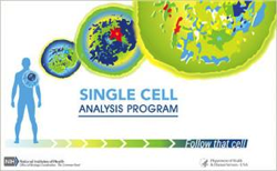 nih-follow-that-cell-image